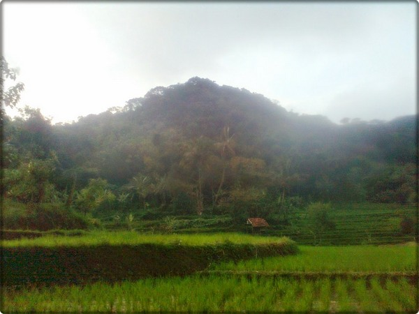 Salah satu Kawasan Cagar Alam Gunung Jagat dilihat dari kejauhan (foto: Itty Karmiati)