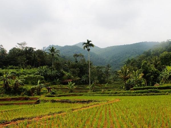 Panorama alam di Desa Karangheuleut (foto: KKNM Unpad Karangheuleut)