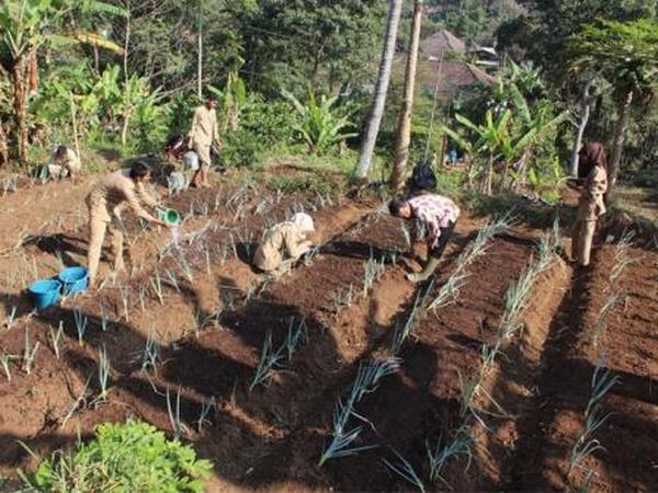 Siswa SMK PPN sedang berkebun (foto: SMK PPN Tanjungsari)