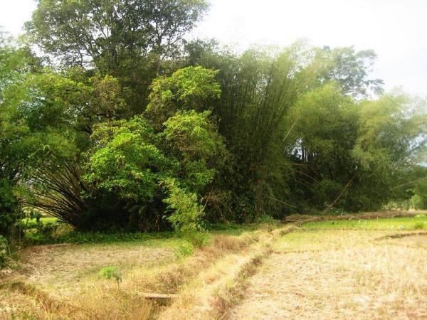 Situs Muhara (foto: facebook Save Jatigede)