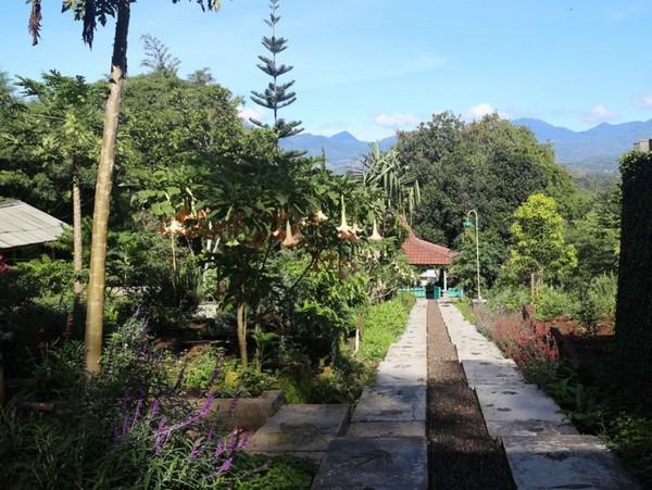 Salah satu sudut kebun Togapuri (foto: Togapuri)