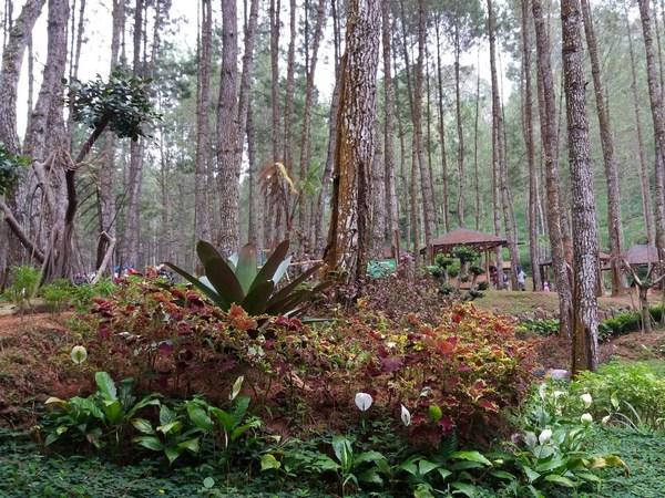 Taman bunga (foto: blogspot irinerainbow)