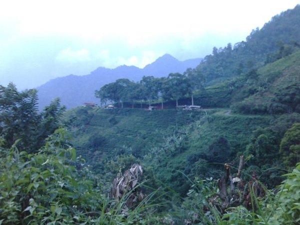 Perkebunan teh di lereng bukit