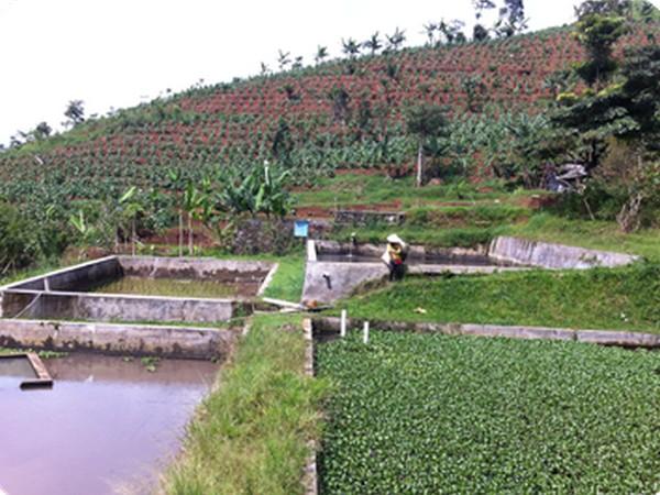 Wisata agro